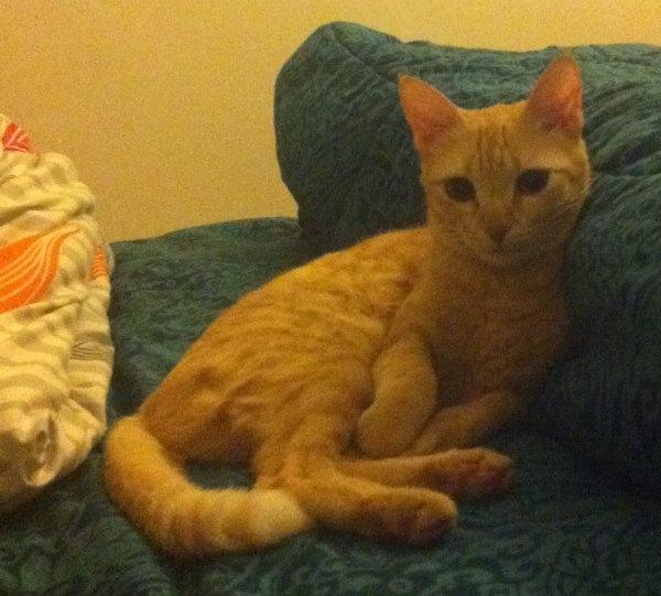 Pets Cat Names Name of Pet Shebha Breed