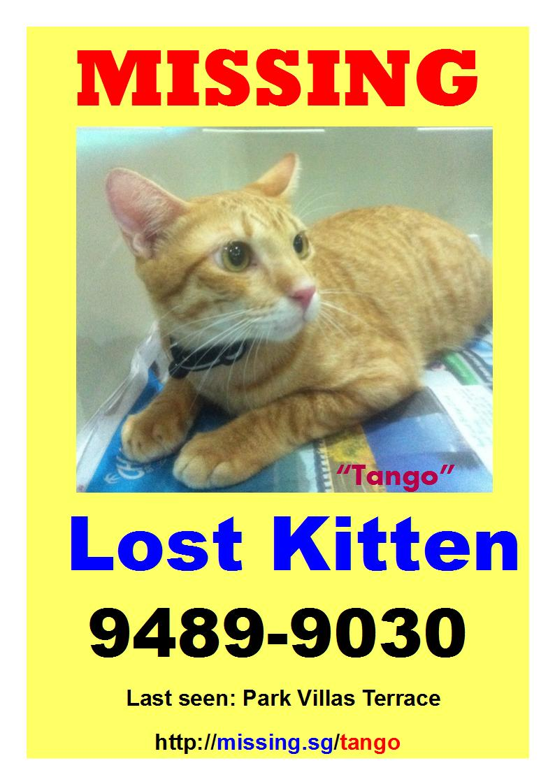 Have you seen this ginger kitten?