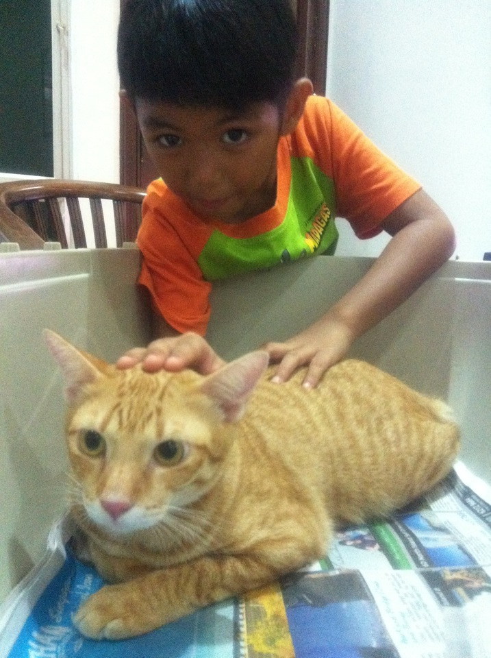 Ginger cat Missing at Park Villas Terrace